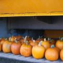 Pumpkins in bus